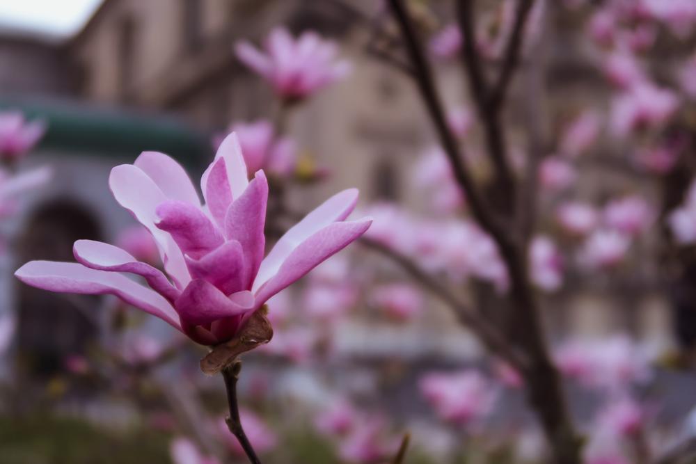 fotografia kwiaty lifestylemilia