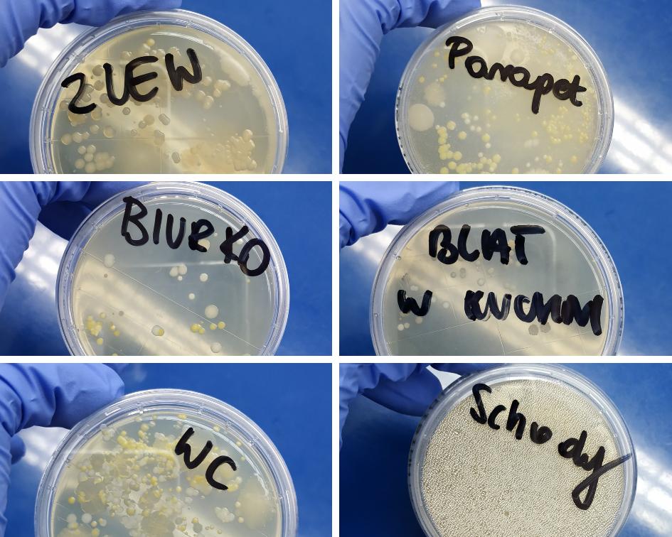 odciski mikrobiologiczne czystość powierzchni